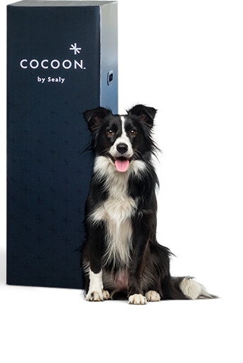 Cocoon by Sealy box with dog